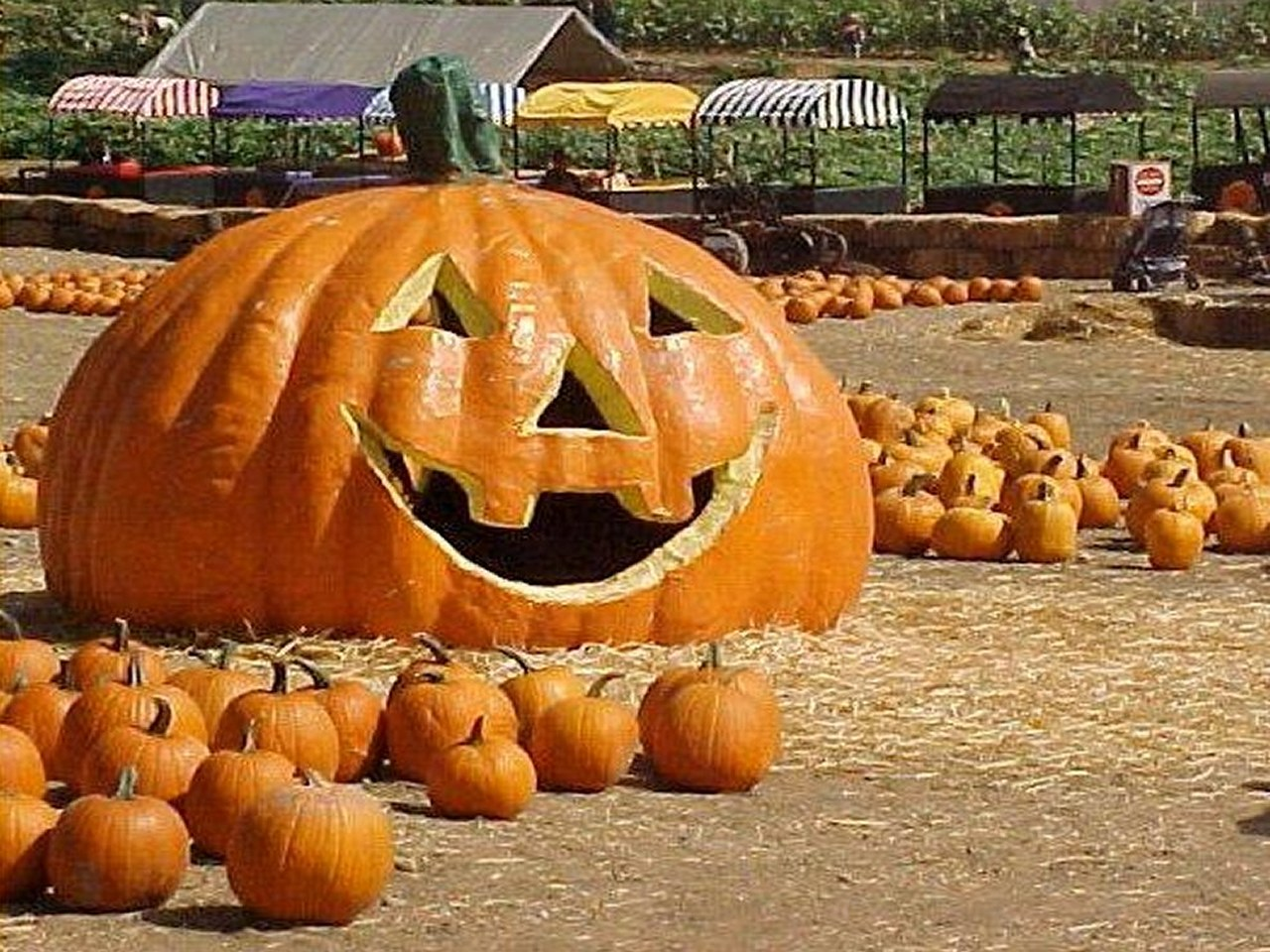 Crazy Unique Creative Pumpkin Carvings
