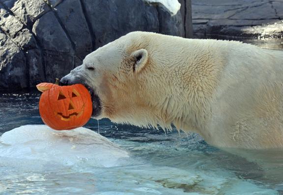 Halloween Polar Bear