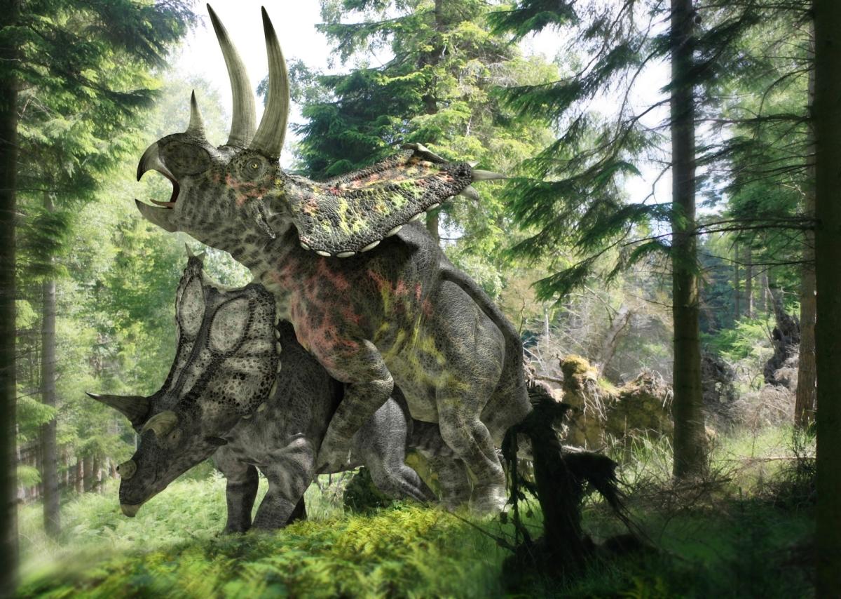 tryanythingceratops