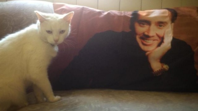 nic-cage-pillow
