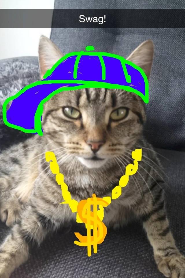 cat-swag-snap