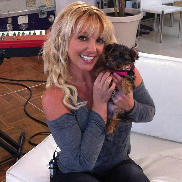 bspears-with-dog